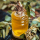 7 Possible Uses Of Curry Leaf Essential Oil