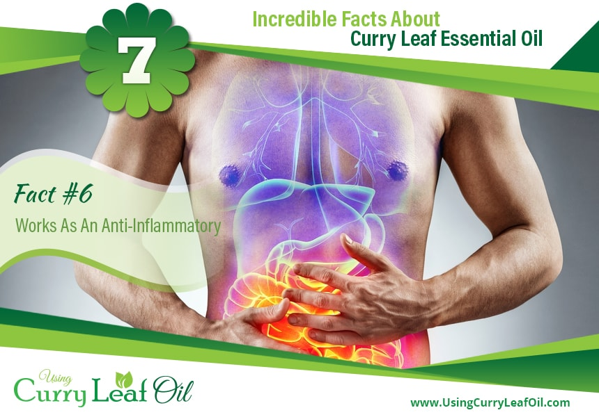 how to use curry leaf essential oil